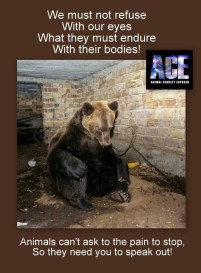 Fur and skin trade - Pics bear we must not refuse with our eyes